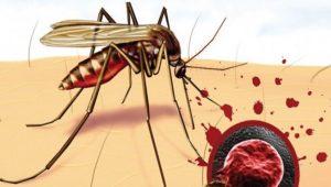 Sıtma Hastalığı Nedir (Malarya Hastalığı)