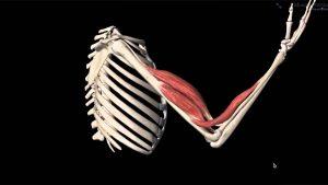 Eklem tipleri ve hareketleri