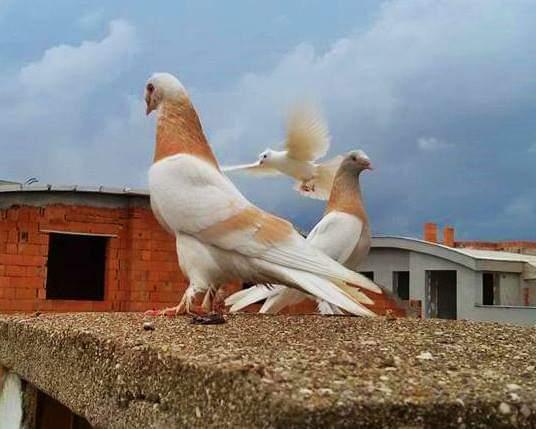 Malatya 112'de Başhekim çalışanlara zorla güvercin baktırıyor