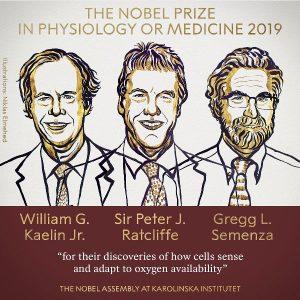 Nobel Tıp Ödülü William Kaelin, Sir Peter Ratcliffe ve Gregg Semenza'nın