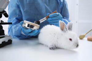 192 milyondan fazla hayvan laboratuvarlarda tutuluyor